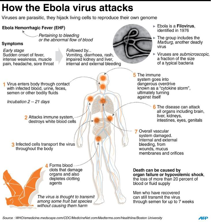 how-the-ebola-virus-attacks